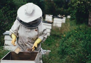 Que fait l'apiculteur pour avoir un miel de qualité supérieure ?