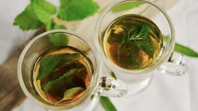 Quel thé vert boire pour maigrir ?
